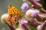 Schmetterling, Marienkäfer, Biene220718_033
