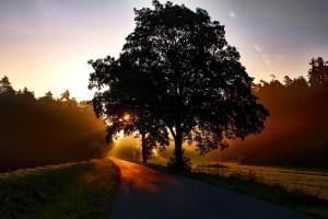 Herbstbaum / Sicherheitstipps für die dunklen Jahreszeit | Einkaufstrolley-Vergleich.de