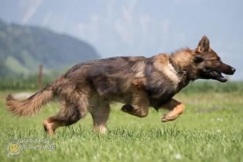 hundefuegen4