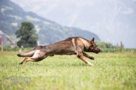 hundefuegen6