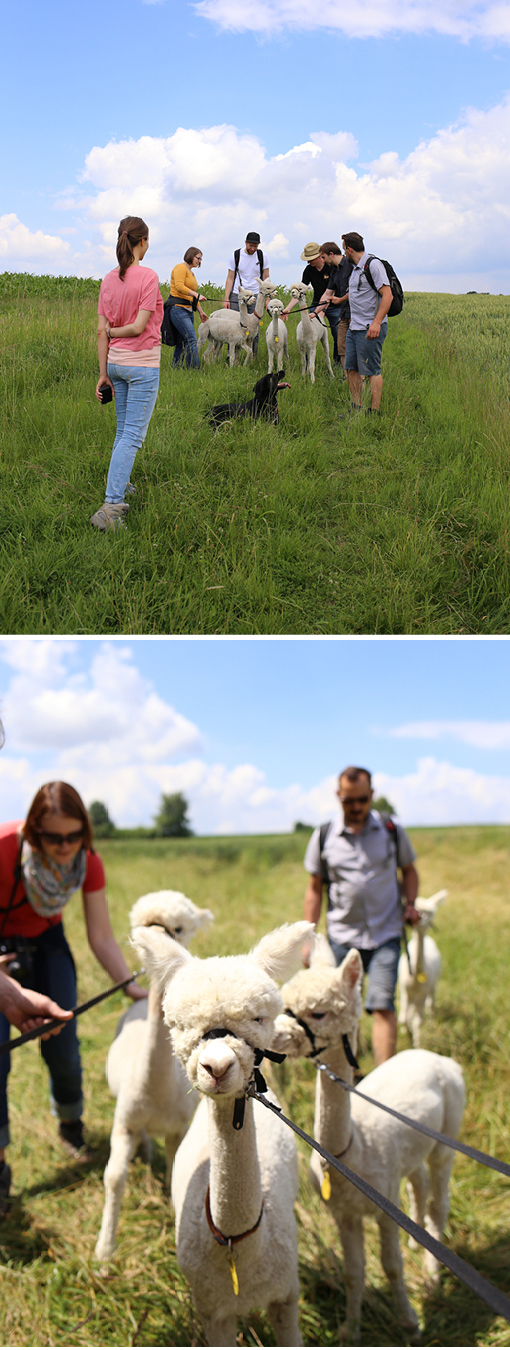 Dachauer Hinterland, Alpaka Spaziergang, München Ausflugstipp