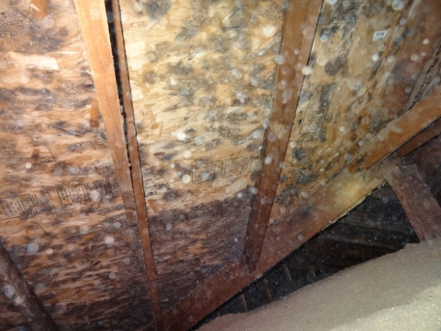 Picture of roof sheeting covered in mold due to poor attic ventilation