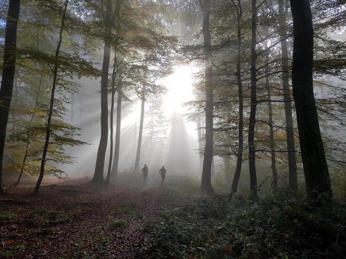 Gorillas im Nebel ;)