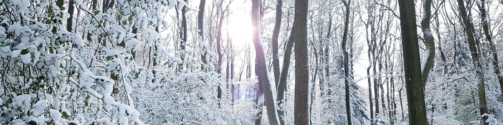 Traumschleifen zum Trailrunning (im Schnee!!!) Teil I