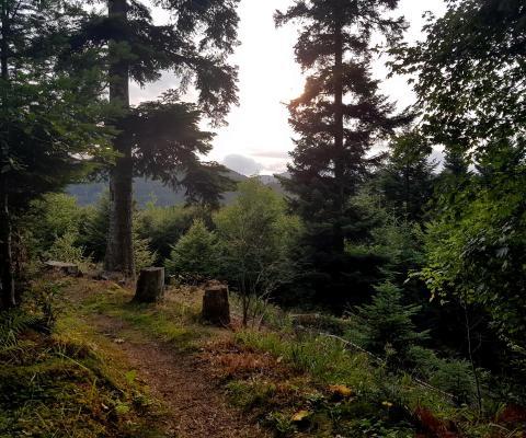 L'INFERNAL Trail des Vosges – ein Inferno!!!