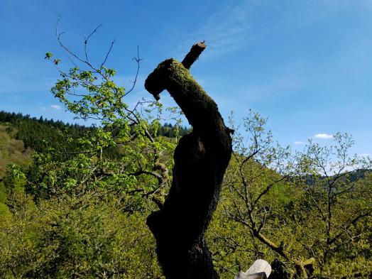 Morscheider Grenzpfad (15)