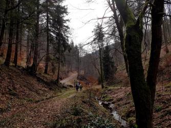 Revierguide Suedpfalz Tag 2 Inov8 Roclite305 (11)