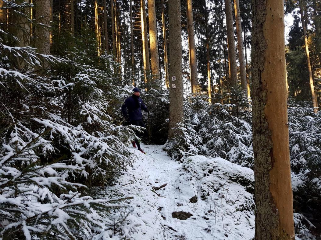Rockenwalder Urwaldpfad (12)