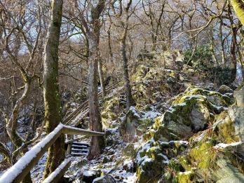 Rockenwalder Urwaldpfad (28)
