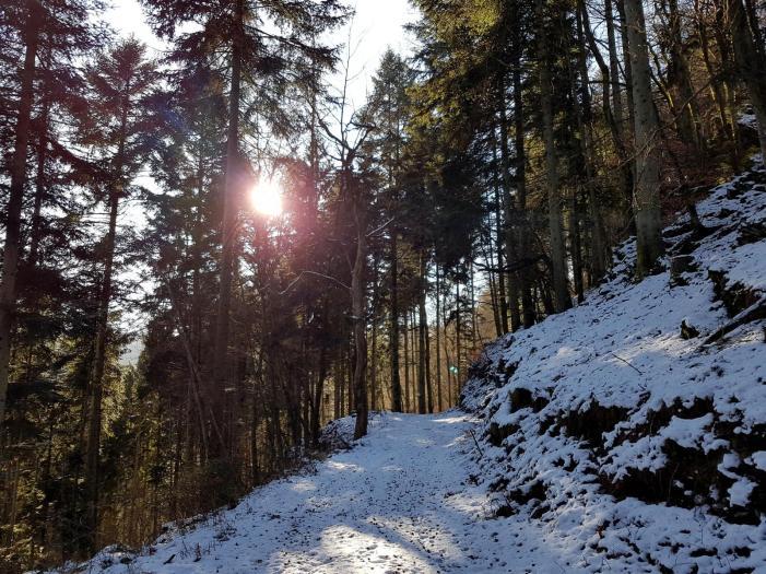 Rockenwalder Urwaldpfad (32)