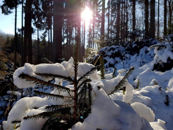 Rockenwalder Urwaldpfad (45)