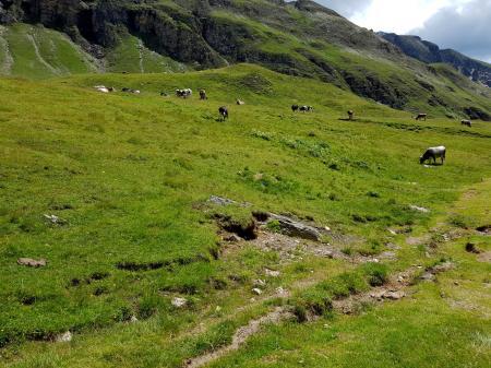 Trailrunning - Trier (13)
