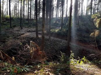 Trailrunning - Trier (17)