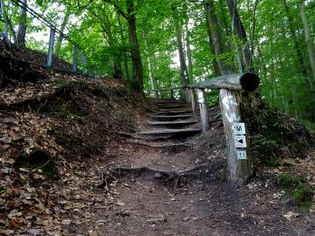 Trailrunning - Trier (23)
