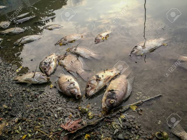 Deltans Cries out as SPDC spreads hazardous chemicals in waterways