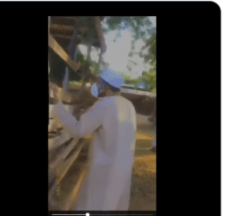 Buhari Appears In New Video Visiting His Cows In Katsina After Refusing To Visit Families And School Of Kidnapped Katsina Students ( VIDEO )