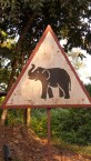 """Just a typical """"elephant crossing"""" sign"""