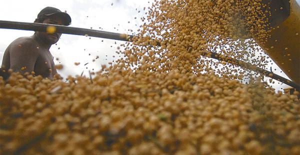 producción del grano de oro el precio de la tonelada de soya no es atractivo para los soyeros Las primeras cosechas de soya están rindiendo casi dos toneladas por hectárea en     la zona este
