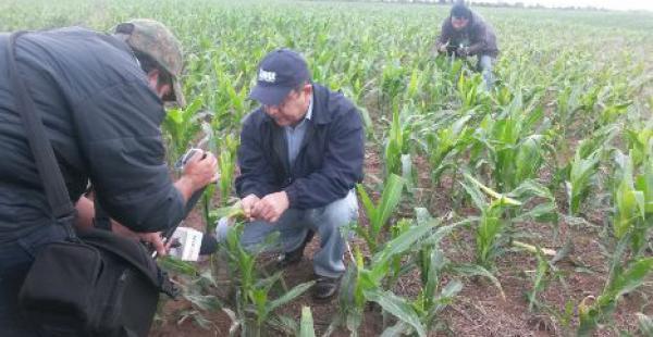 Un grupo de mas de 10 periodistas acompaña a  técnicos de Anapo y del Ibce en un recorrido por esta zona para conversar con agricultores afectados por plagas y enfermedades en los cultivos