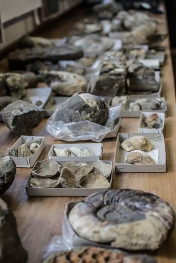 Parte de los 6.000 fósiles recuperados de los mares antárticos para este estudio.