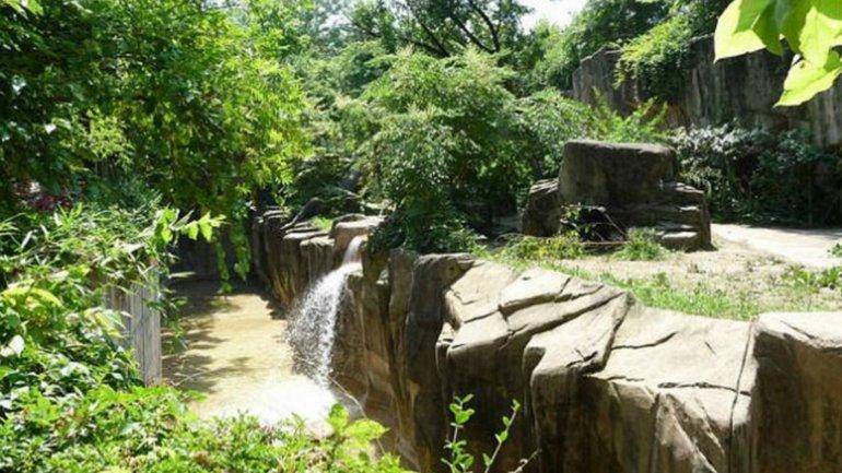 El hábitat del gorila en el zoológico de Cincinnati