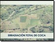 COCALES-manos 1