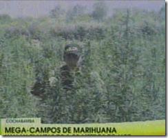 MARIHUANA-96Toneladas 1