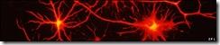 110106175650_sp_brain_cells_spl_526