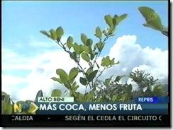 COCamasplantacionesquefruta1