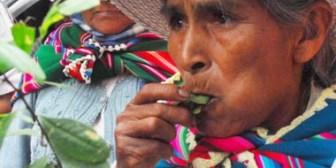 Gobierno cree que 85% de la población de Bolivia acullica coca, estudio señala que  sólo es el 14%
