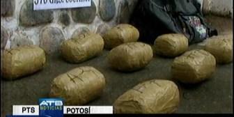 Narcotráfico. Incautan cocaína en Potosí, plantines de marihuana en La Paz y droga camuflada en ají en Sucre