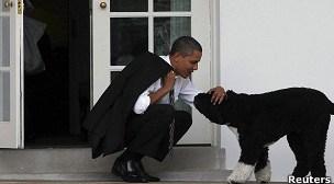 """Llevar perros al trabajo """"reduce el estrés"""" de los empleados"""
