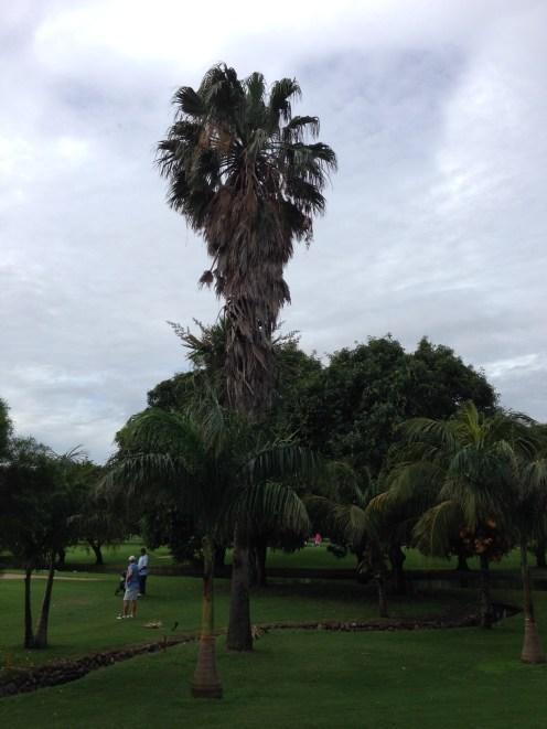 La palmera de Juan Pablo Zambrana