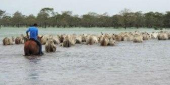 Fundación Milenio: pérdidas económicas por inundaciones, enero-febrero de 2014
