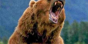 Ciclista se graba a sí mismo perseguido por un oso grizzly