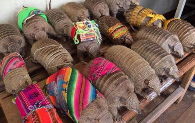 Cochabamba: En una hora rescataron 290 animales silvestres que eran comercializados ilegalmente