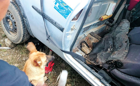 Controles. El can Hiromi, del CACDD, junto al motorizado donde encontró la sustancia controlada.