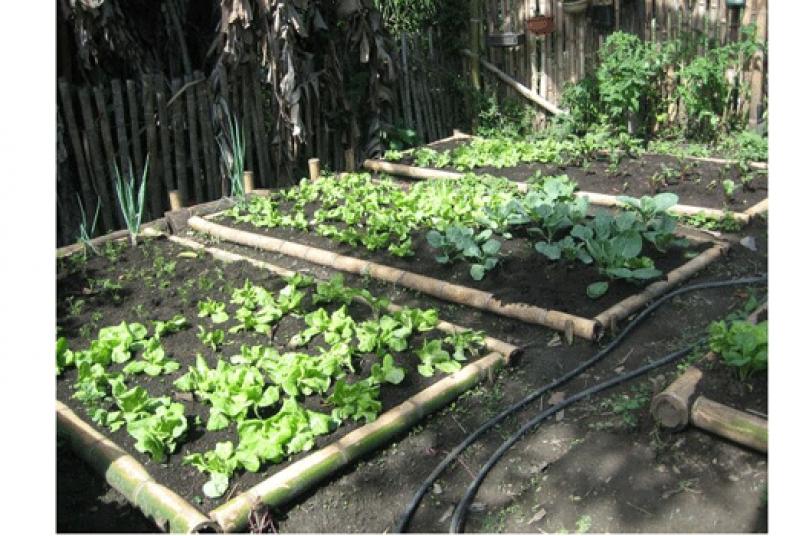 HUERTO URBANO. En la gráfica,  plantines de hortalizas en el terreno de Nué Morón, quien aprendió esta actividad en su infancia, ya que es costumbre que en zonas rurales los niños sean educados sobre estos procesos agrícolas.