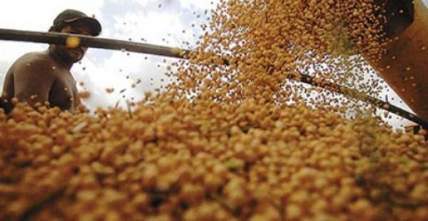 El agro según el Ejecutivo registra un incremento en sus exportaciones