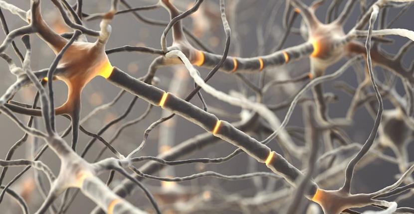 neuronas artificiales IBM