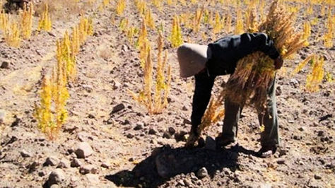 Sequía en Potosí por efecto de la escasez de lluvias
