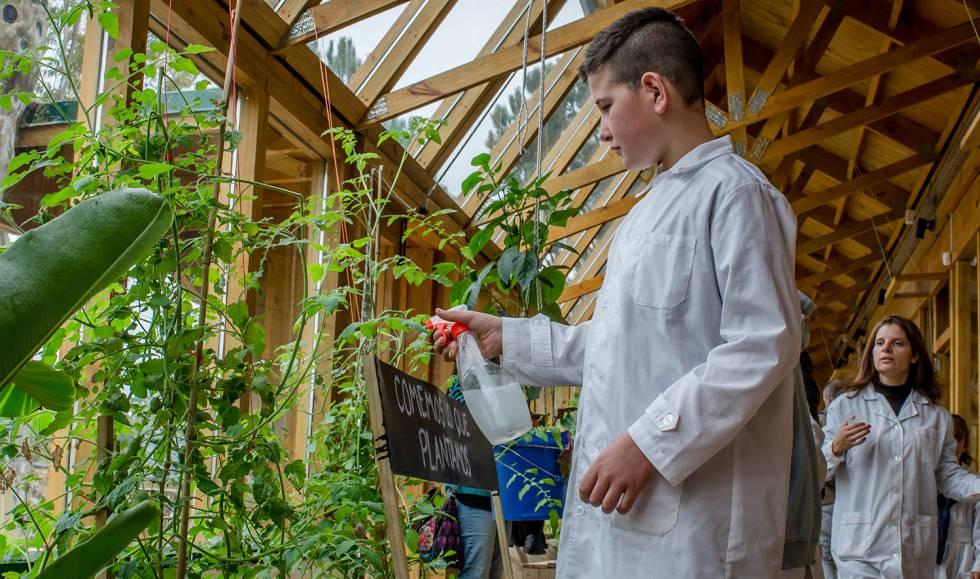 Los alumnos cuidan el huerto orgánico que abastece de frutas y verduras al comedor escolar.