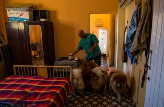 El criador de Chow Chows, Luis Aguiar, en su casa de La Habana. / AP