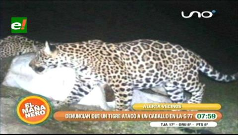 Reaparece jaguar en la G-77, atacó a un caballo