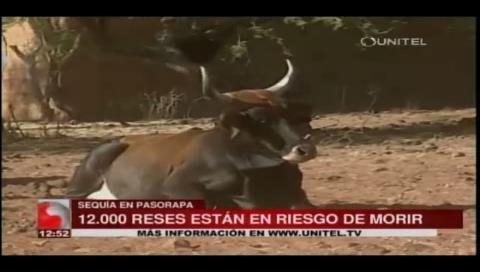 Cochabamba: Mueren al menos 140 reses en Pasorapa por falta de agua
