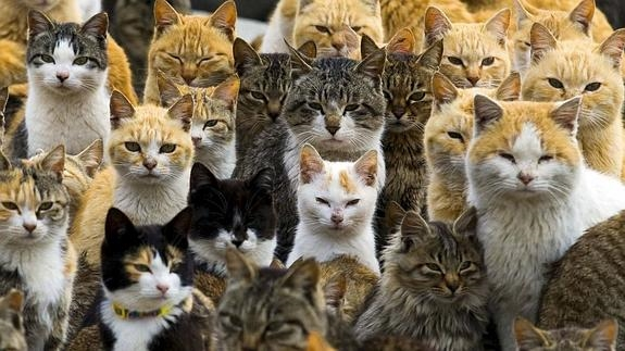 """""""Formar colonias de gatos callejeros para acabar con las ratas es una idea absurda"""""""