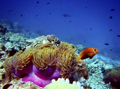 Los colores subacuáticos de Melanesia (Getty Images).