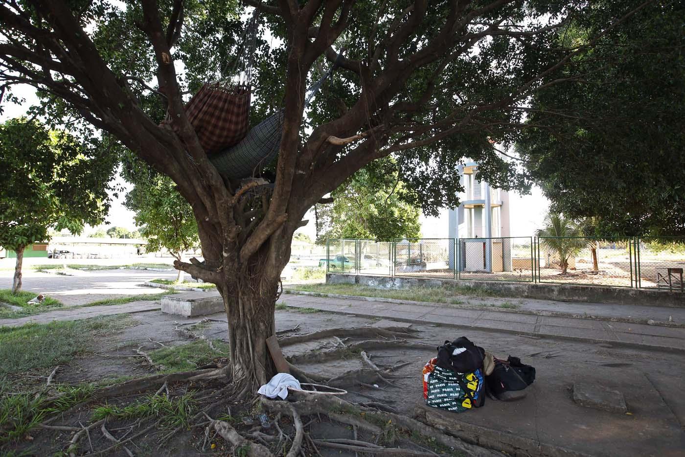 """ACOMPAÑA CRÓNICA: BRASIL VENEZUELA BRA05. BOA VISTA (BRASIL), 22/10/2016.- Fotografía de un árbol donde algunos inmigrantes venezolanos han instalado sus hamacas este jueves, 20 de octubre de 2016, frente a la terminal de autobuses de Boa Vista, estado de Roraima (Brasil). Es venezolana, tiene 20 años, quiere ser traductora y hoy, en una hamaca colgada en un árbol que ha convertido en su casa en la ciudad brasileña de Boa Vista, mece unos sueños que, según aseguró, no serán truncados por """"el fracaso de una revolución"""". """"No estoy aquí por política. Lo que me trajo aquí fue el fracaso de unas políticas"""", dijo a Efe Sairelis Ríos, quien junto a su madre Keila y una decena de venezolanos vive en plena calle, frente a la terminal de autobuses de Boa Vista, una ciudad que en los últimos meses ha recibido unos 2.500 emigrantes de ese país vecino. EFE/Marcelo Sayão"""