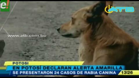 Declaran alerta amarilla por rabia canina en Potosí
