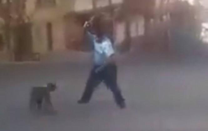 Envían a la cárcel a dueño de pitbull que atacó a una familia
